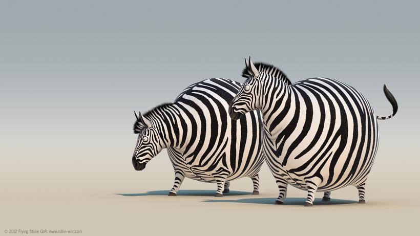 圆滚滚野生动物动画团队介绍